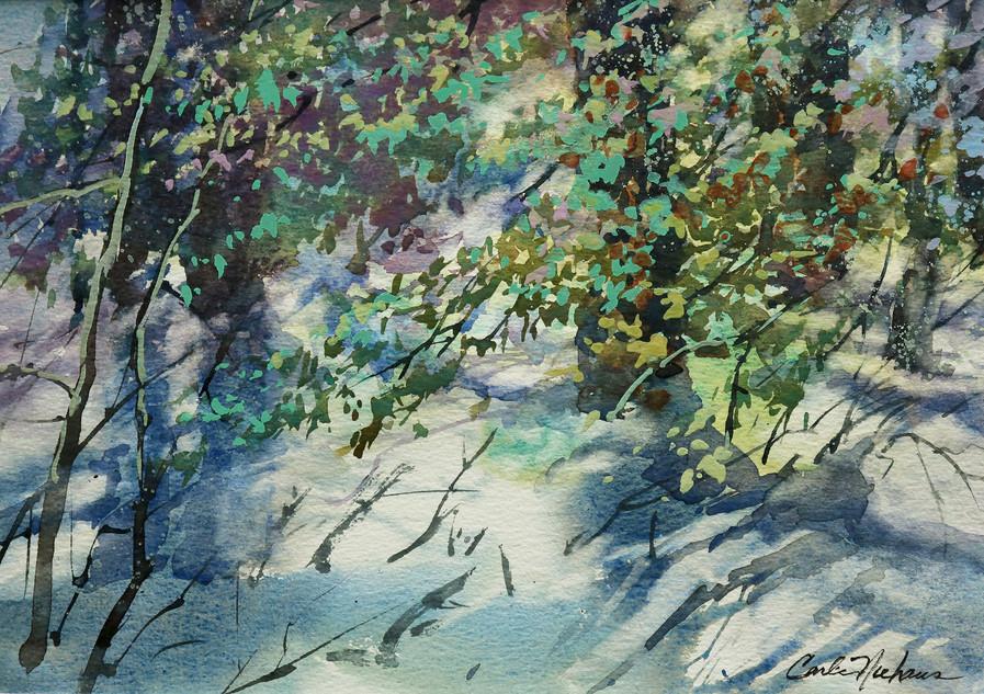 9. Wintering  Pines