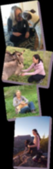 Photo-Stack-Heartsong-Animal-Healingc.pn