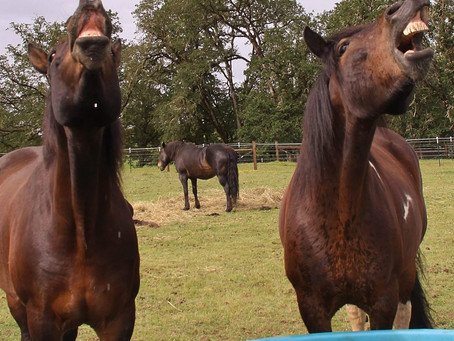 Horses Need to Eat 20 hours a day