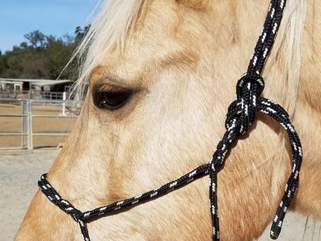 A Mindful Horse Halter