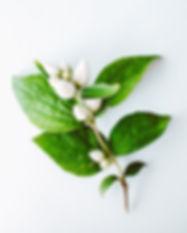 bloom-branch-bright-2552418.jpg