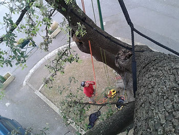 Haubanage arbre Saint maximin