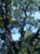 élagage, abattage arbre, débroussaillage: Saint Maximin, Brignoles, Le Luc, Vidauban, Carces, Le Val