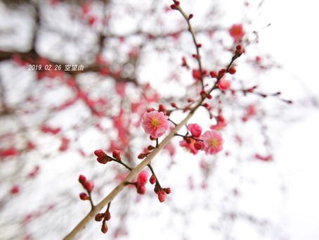 出張女性カメラマン・春の風景を撮りに