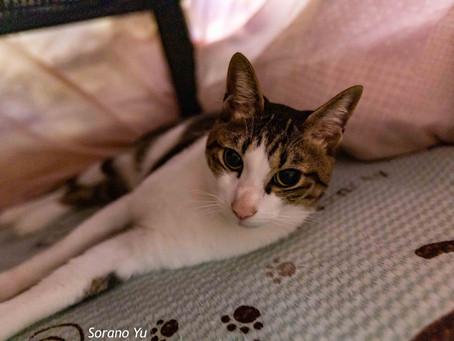 出張女性カメラマン・猫の写真を撮ろう!