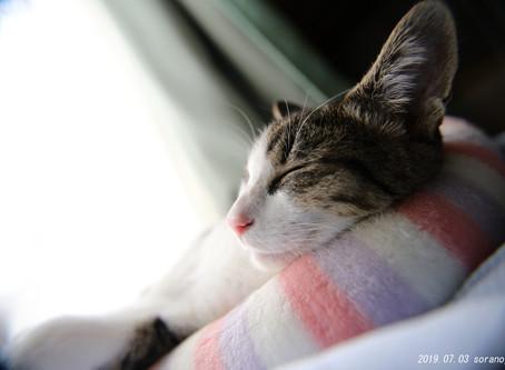 出張女性カメラマン・大切な飼い猫の写真を撮る