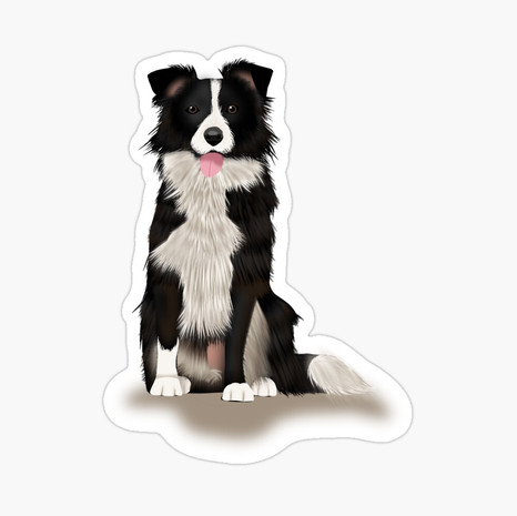 Border Collie Glossy Sticker