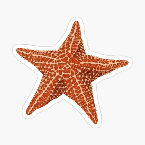 Starfish Glossy Sticker