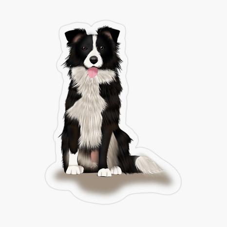 Border Collie Transparent Sticker