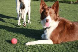 Rolo enjoying the sun - Doggy Day Care Cornwall