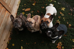 Freddie, George, Hattie and William ready and awaiting treats at Doggy Day Care Cornwall