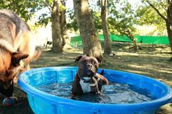 Paddling Piran - Doggy Day Care Cornwall
