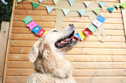 Buddy's Birthday at Doggy Day Care Cornwall
