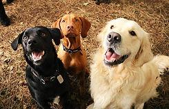 dog-walking-dog-day-care-doggy-day-care-