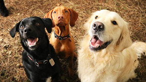 Dog Walking vs Dog Day Care – What is the difference?