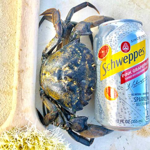 Green Crab Nation Size 1.jpg