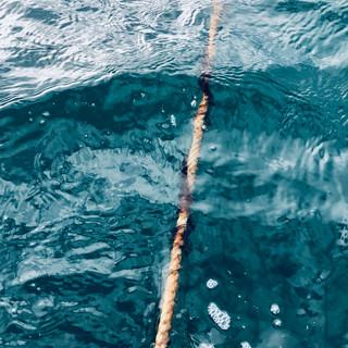Chatham Kelp_IMG_7204.jpg
