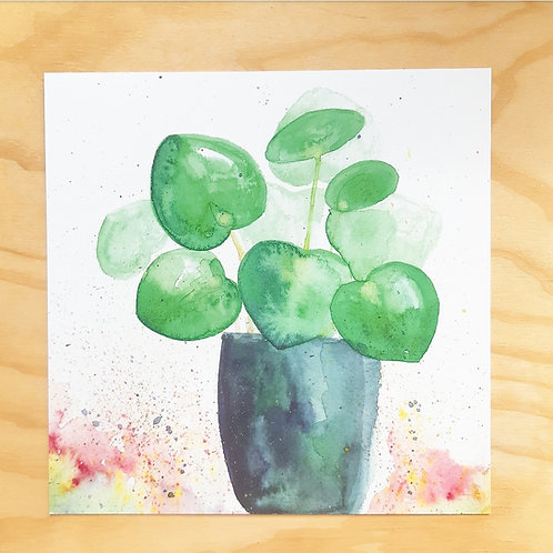 'Pannenkoekenplant' Mini poster vierkant