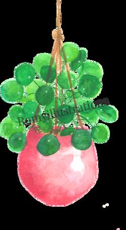 Pannenkoekenplant_edited_edited