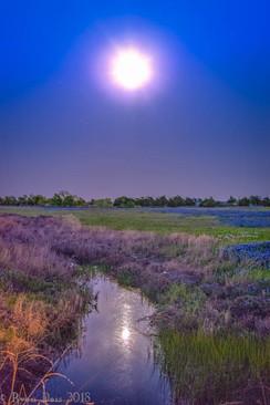 16- Blue Moon Dreams