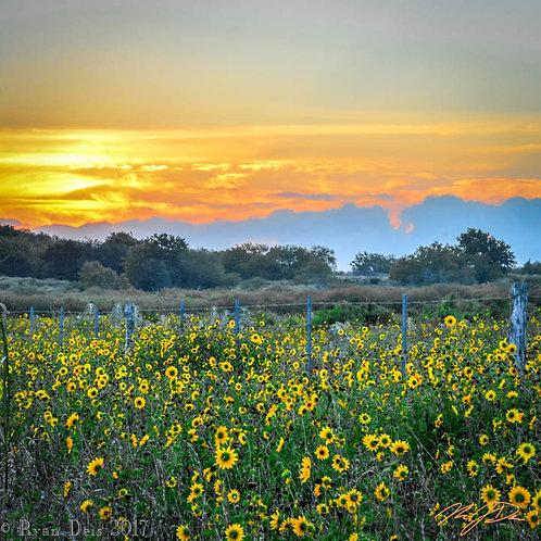 D1C3 Dot-Morning Sunshine