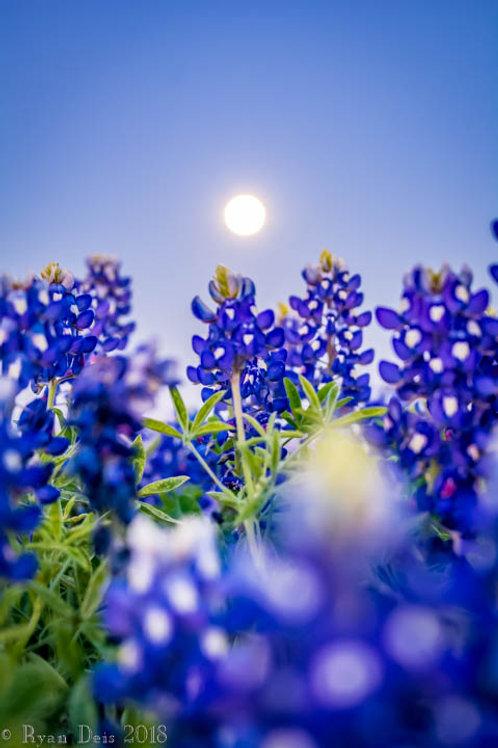 Bluebonnet Moon