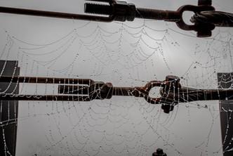 27- Mississippi Dew Drops