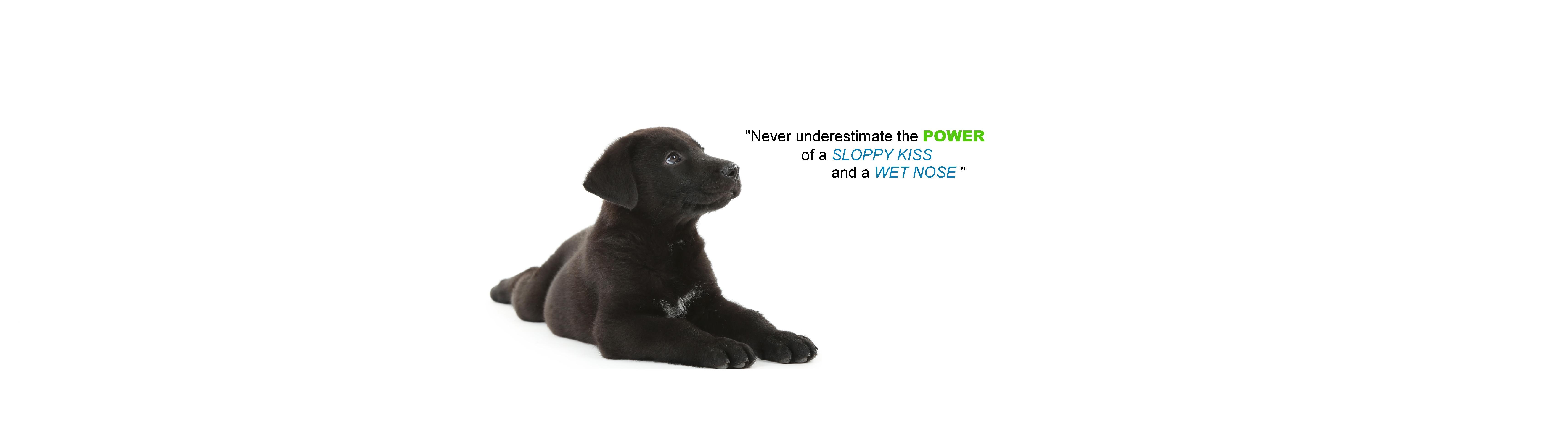 puppy banner 2