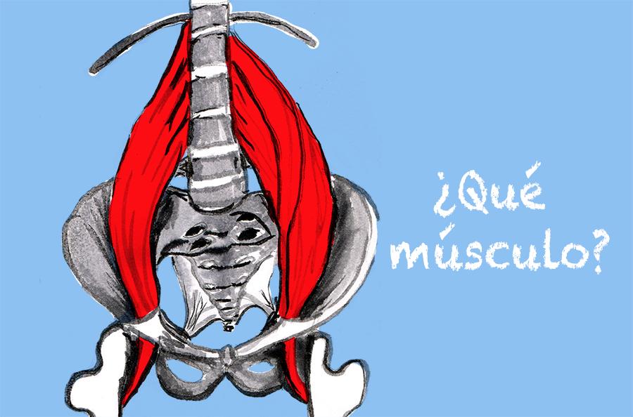 Que-es-el-musculo-psoas