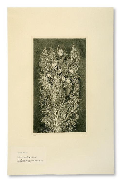 """Stig Borglind: """"Orchis"""" (Orkidéer)"""