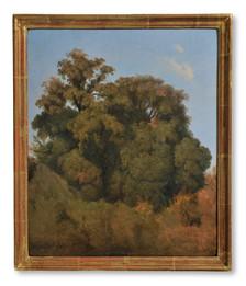 Joseph Magnus Stäck (1812-1868) - Trädstudie. Ariccia - (sold)