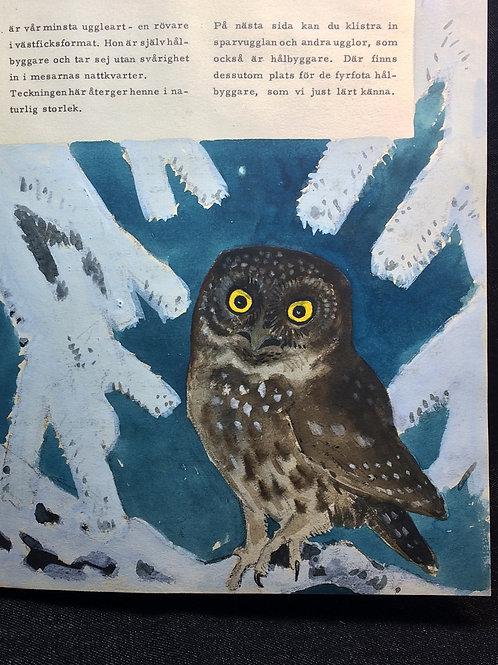 Harald Wiberg & A. E. Malm: Outgivet manuskript om fåglar