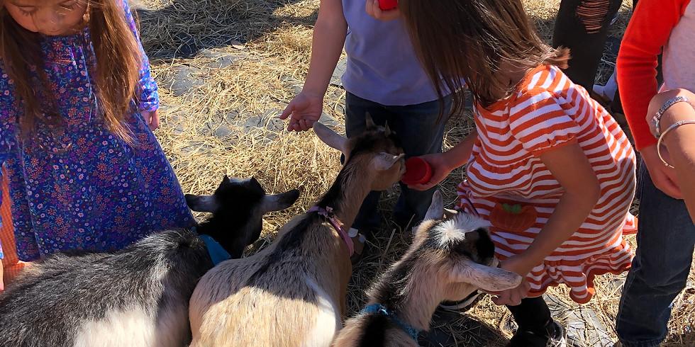 Weekly Family Farm Field Trip