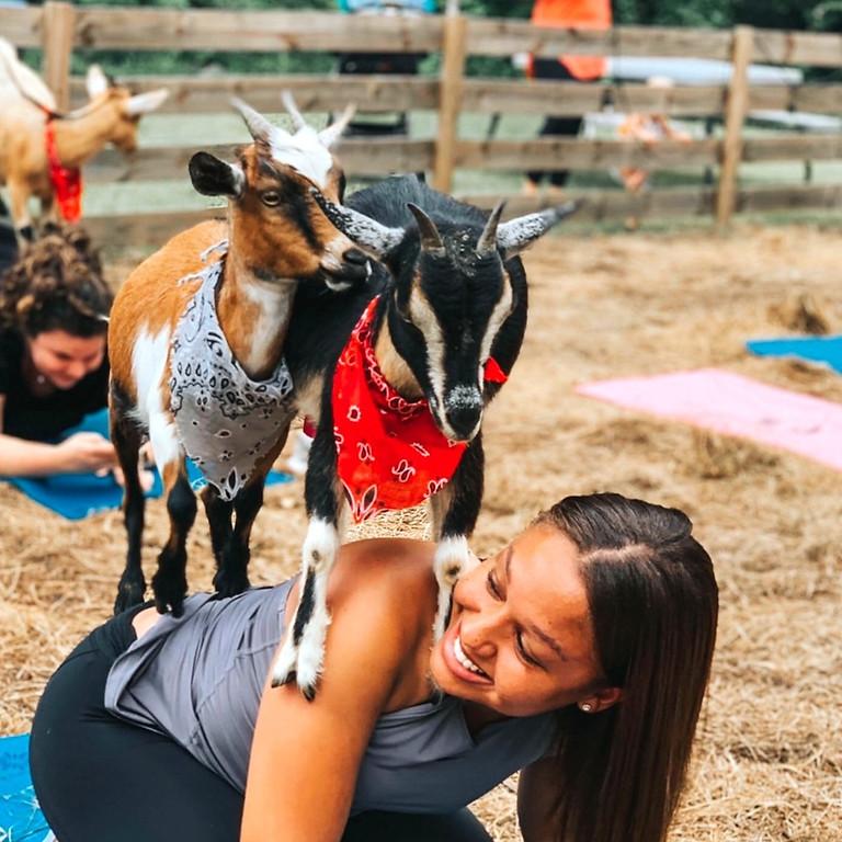 Beginner Goat Yoga~Gentle Flow