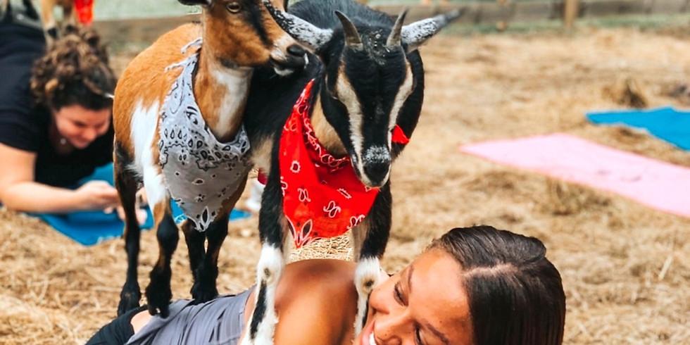 Dec. 5-Beginner Goat Yoga~Gentle Flow