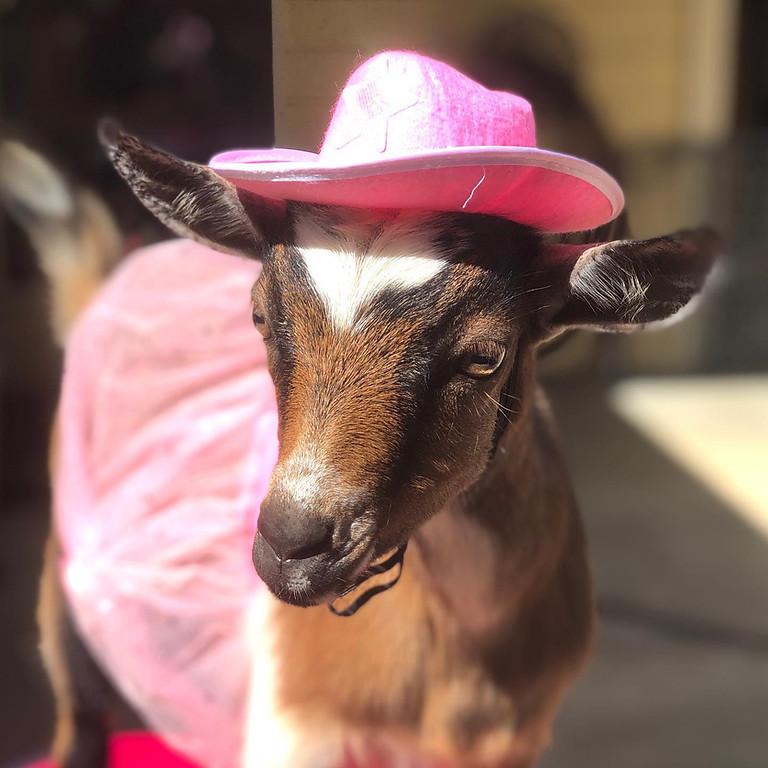 Beginner Goat Yoga-HALLOWEEN EDITION