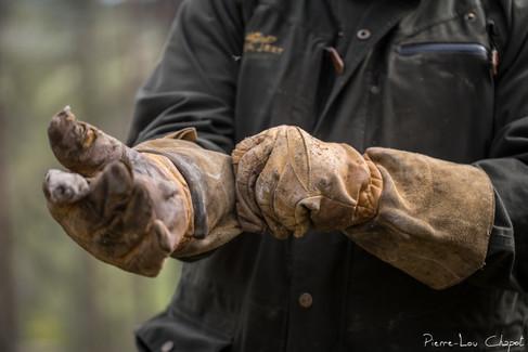 Une épaisse paire de gant le protégera des serres de l'aiglon.