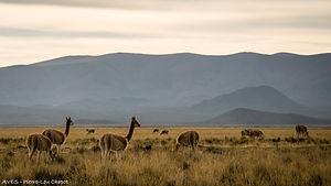 Altiplano et sommets du Nord-Ouest