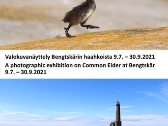 Une exposition Art & Science sur les eiders du phare de Bengtskär...