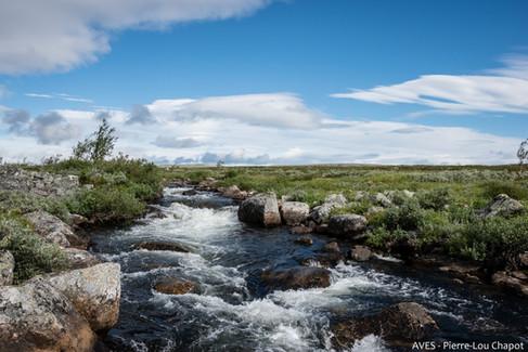 Siedjonjohka river
