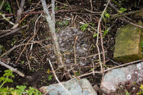 Des nids bien camouflés