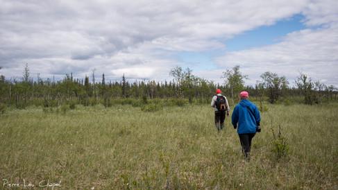 Les nids se trouvent bien souvent sur des sites isolées et difficilement accessibles. Olli-Pekka et Lea ont parfois plusieurs kilomètres de marche dans les forêts et marais finlandais pour les atteindre.