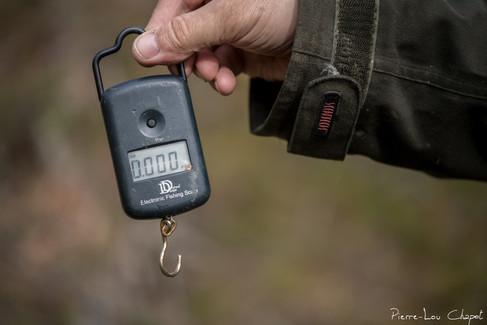 An electronic fishing scale will measure the mass of the bird!