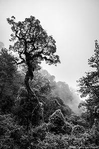Ambiances subtropicales de Calilegua