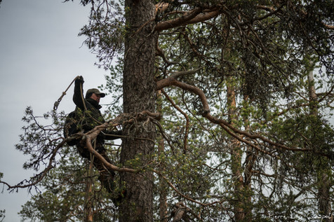 Using a two-rope system that he sets one after the other at his belt, Jarmo moves up and passes the many obstacles formed by the branches.