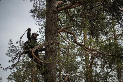 A l'aide d'un système de deux cordes qu'il fixe l'une après l'autre à sa ceinture, Jarmo évolue vers le haut et passe les nombreux obstacles formés par les branches.