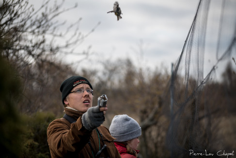 The flight is finally given with a little momentum to prevent the bird from getting back into the net immediately.