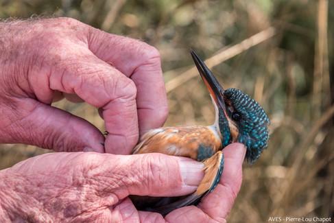 Fun Kingfisher