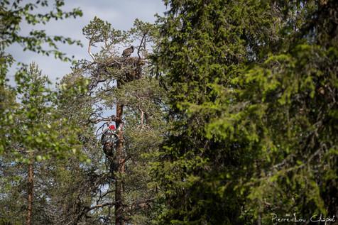 Olli-Pekka comes down as he climbed!