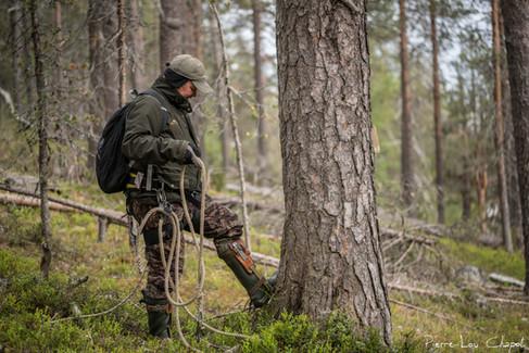 Et Jarmo peut s'attaquer à cet impressionnant pin de plus de 10 mètres de haut.